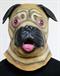 Собака Мопс - фото 34560